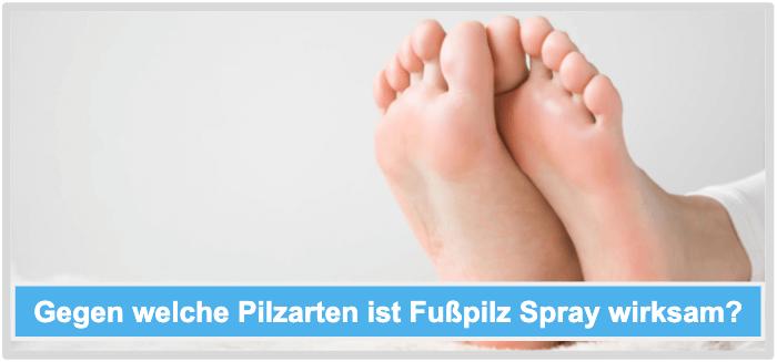 Fußpilz Spray Pilzarten