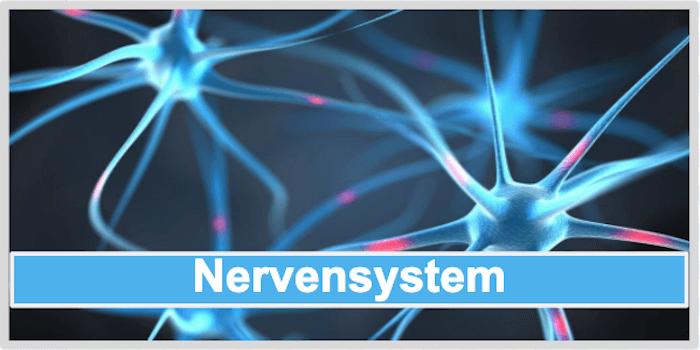 Nervensystem Acerola