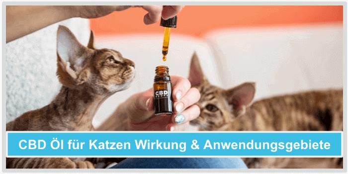 Cbd oel fuer katzen Wirkung Inhaltsstoffe Anwendungsgebiete